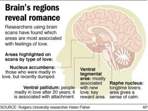 brain on love